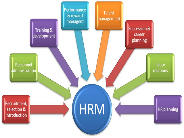 effectiveness and efficiency of hr essay